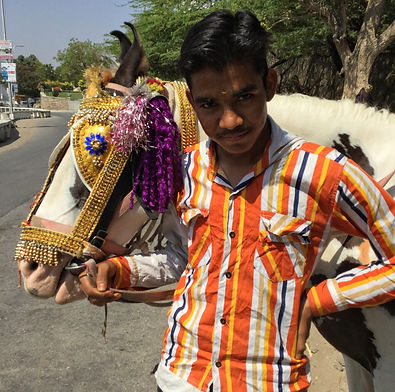 Young Indian man with his Marwari horse