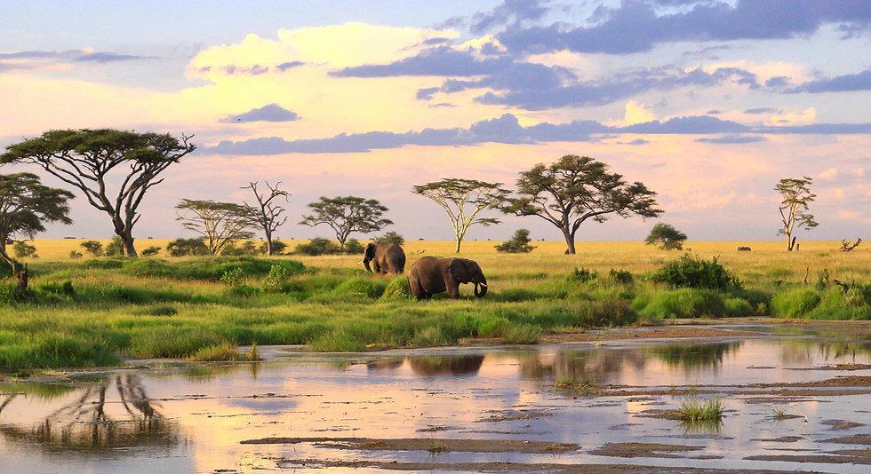wild-elephants-tanzania-187870234-57a9fa