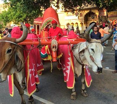 Jaipur festival - solo women tours