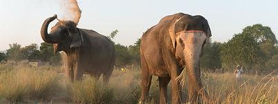 Elephant Sanctuary Jaipur, solo women tours