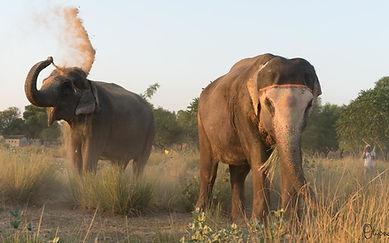 Elephant Sanctuary Jaipur.jpg