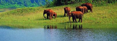 Raja Malai National Park, India