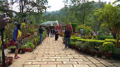 Rose Garden in Kerala