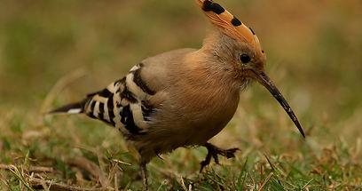 bird pic 1.jpg