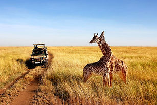 How-To-Plan-A-Perfect-Safari-In-Tanzania
