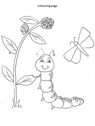 butterfly life cycle colouring page.png