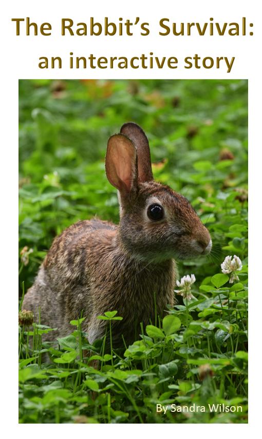 rabbit survival