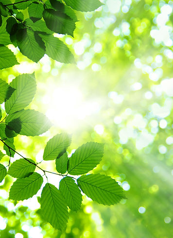 Sun beams and green leaves.jpg