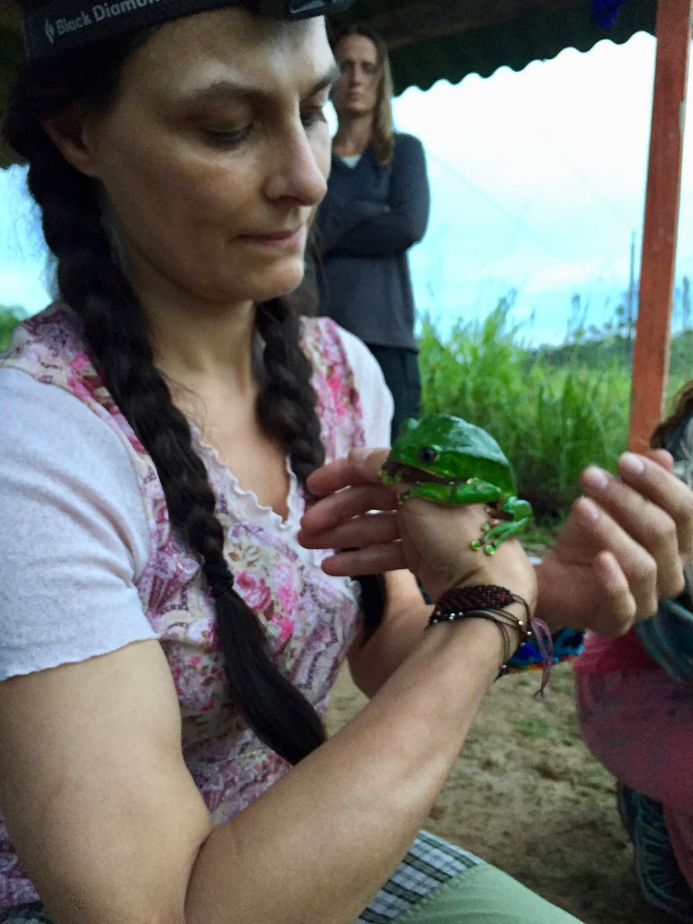 Her holder jeg Kambo frøen efter den er 'høstet' - selv på dette tidspunkt og lige efter daggry, er den rolig og kærlig. Umiddelbart efter blev den sat fri i junglen.