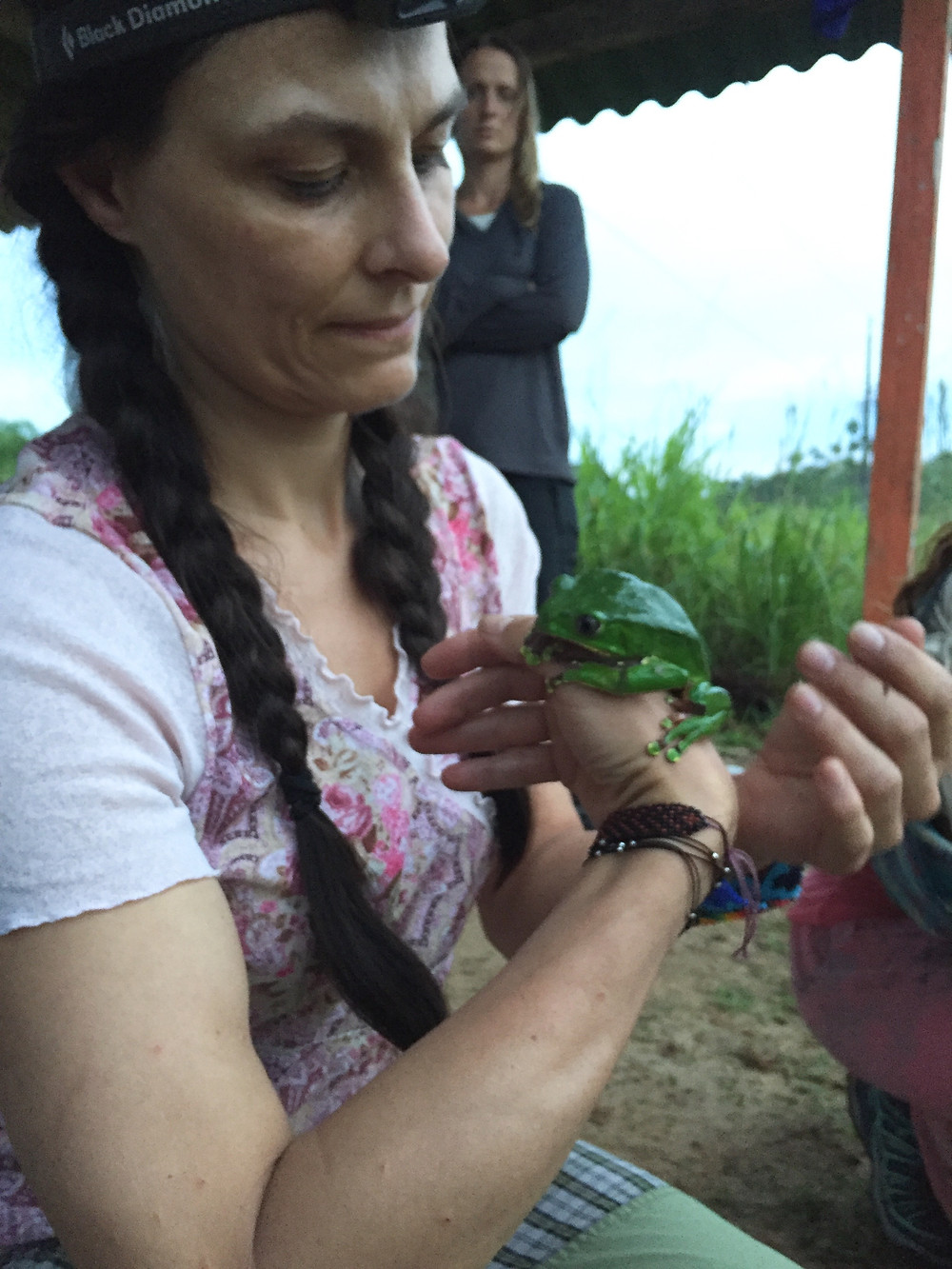 kambo kambodk kambodanmark frog frø