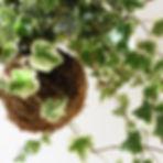 Outras plantas- FIU