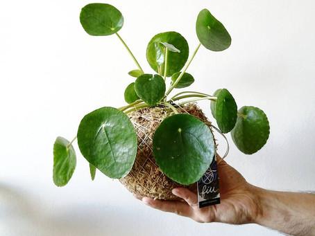 8 Benefícios das plantas de interior em sua casa!