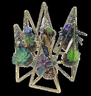 mini pirâmides com kokedama suculenta FI