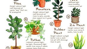Que planta gostaria de ter no seu Kokedama?