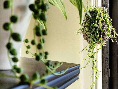 Porquê que as plantas nos deixam felizes!