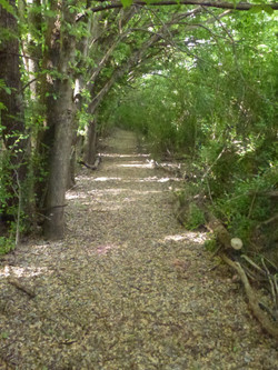 Rear path. P1100581 copy.jpg