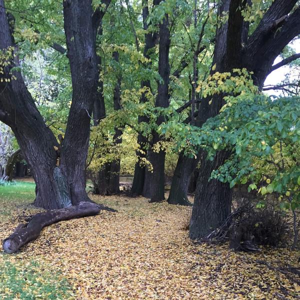 Elm Grove Trail