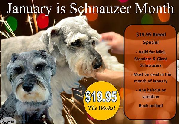 Schnauzer Days January.jpg