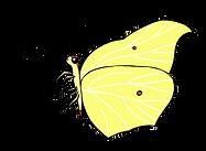 Zitronenfalter_WEB.png