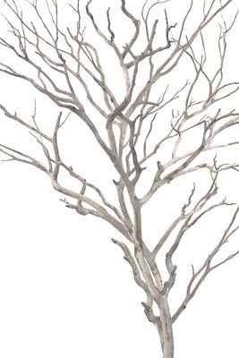 ENFOLDING BRANCHES