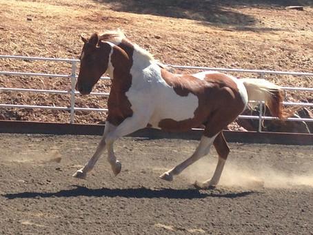 Saddle Fitting and Clinics