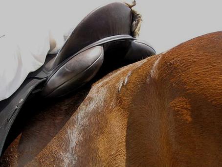 The Saddle as an Adaptor