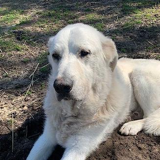 adopt-dog_1000x1000.jpg