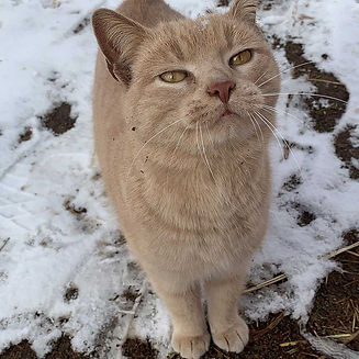 adopt-cat_1000x1000.jpg