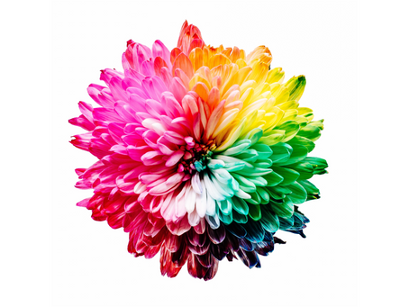 Building Your Brand with Color