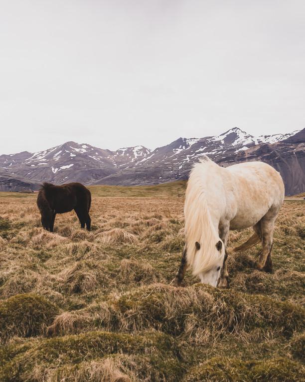 Nay Nay - Iceland