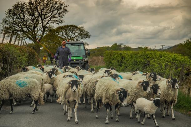 Rush Hour - Keswick, Cumbria