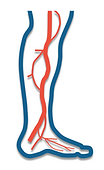 artery (arteries) richardson, tx