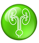 urology_green_icon.png