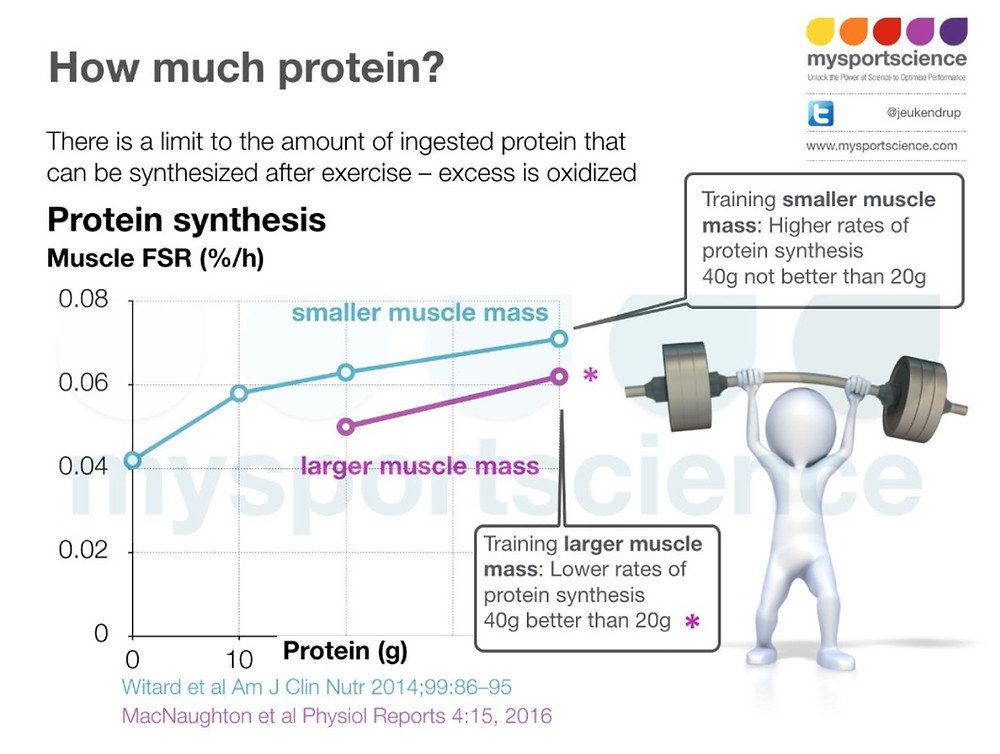 protein amount and protein synthesis