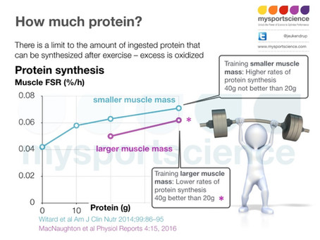 Time to rethink the protein intake guidelines  for athletes?