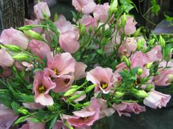 Blumen-Bechstein_06
