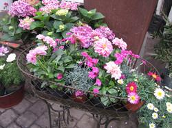 Blumen-Bechstein_49