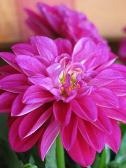 Blumen-Bechstein_53