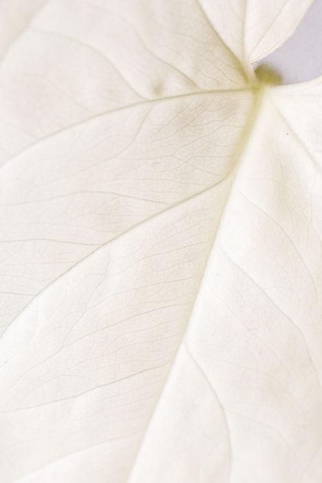 pexels-karolina-grabowska-4590785.jpg