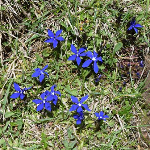 Juhu...in den Bergen ist der Frühling da!