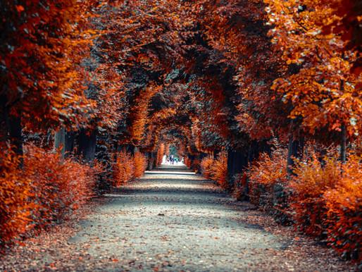Autumn Newsletter: Executive Summary