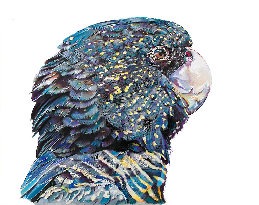 Sally Edmonds talks to Army Art about depression, mental health, using art as therapy and learning to go slow through drawing detailed pictures of Australian birds