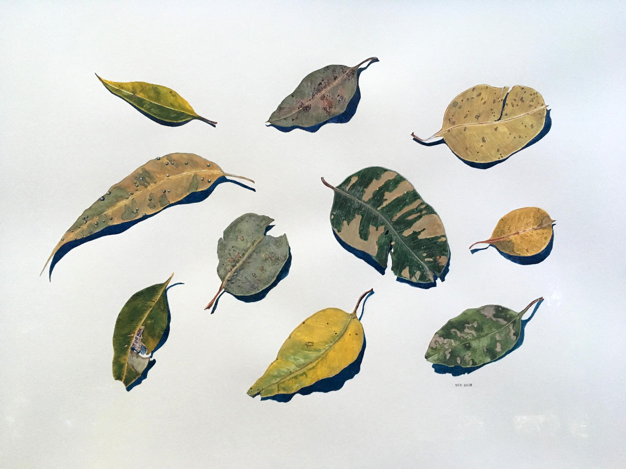 Sarah T-S Leaf Portraits