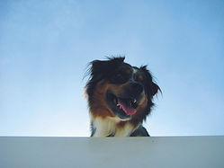 Hausbooturlaub mit Hund - Revier Charter