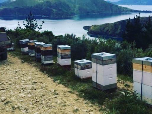PollenNation社のこだわり