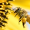 Thumbnail: Bee Pollen (ビーポーレン)  (100g)