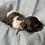 Thumbnail: Green Standard Poodle