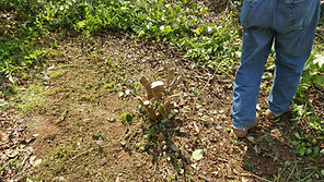 greenville stump grinding and removal greenville greer spartanburg lyman duncan taylors travelers rest