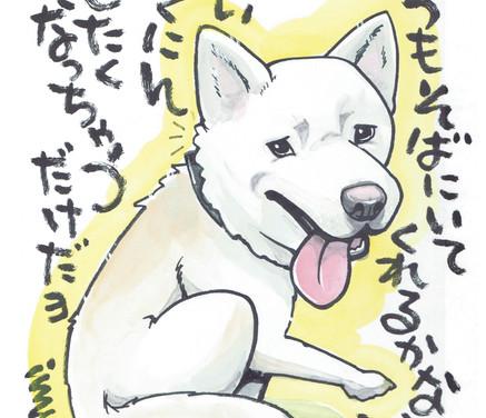 アナログ/ペットインスピ