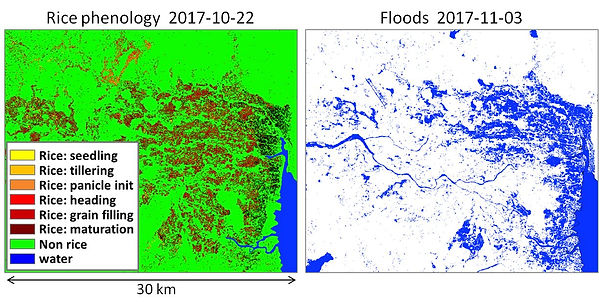 rice_phenology_vs_floods.jpg